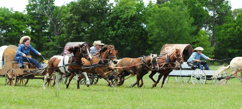1836 Chuckwagon Races At The Diamond B Ranch